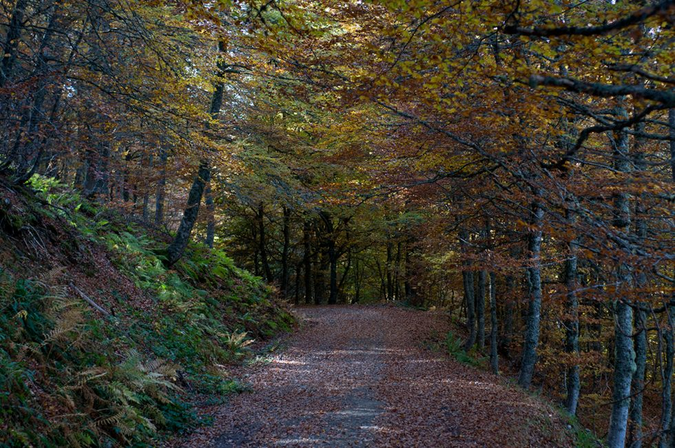 Ioannis-Stamou-Naturaleza-color-20