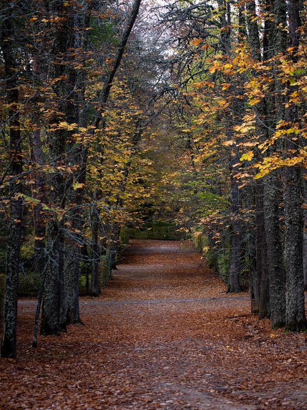Ioannis-Stamou-Naturaleza-color-3