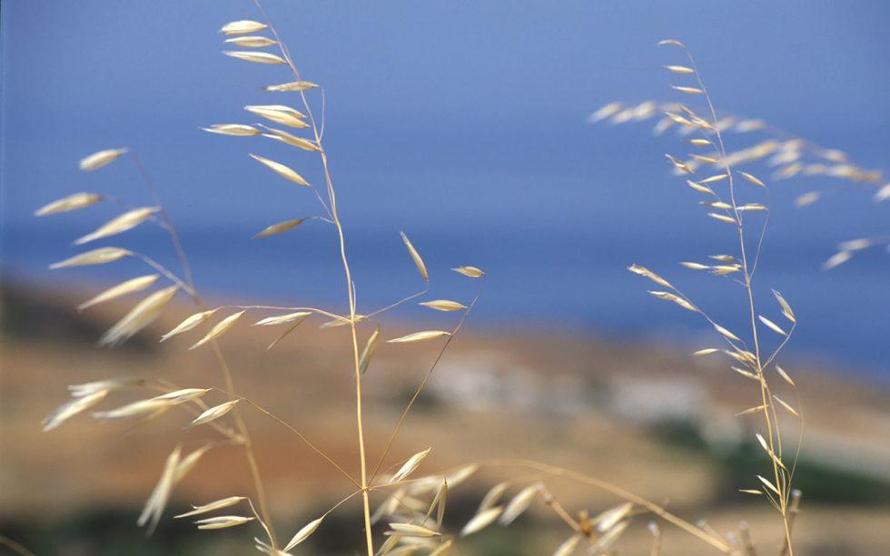 Ioannis-Stamou-Naturaleza-color-33